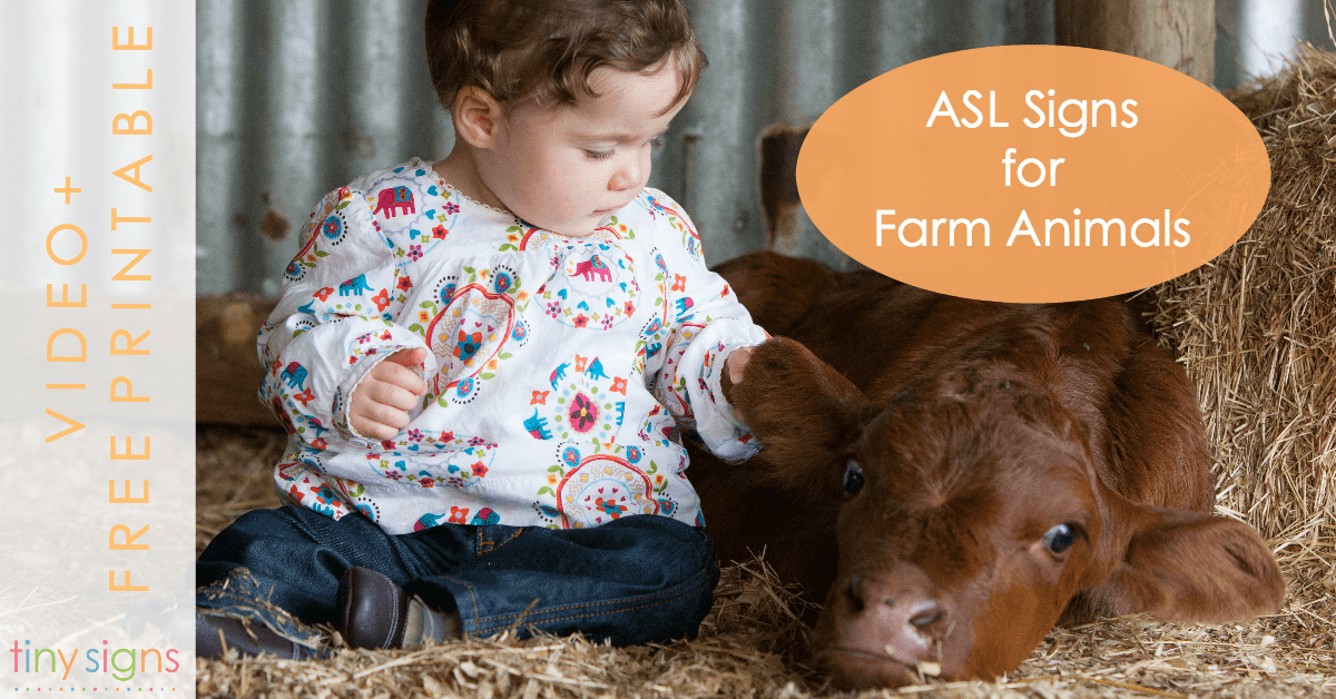 Baby Sign Language Asl Signs For Farm Animals Tiny Signs