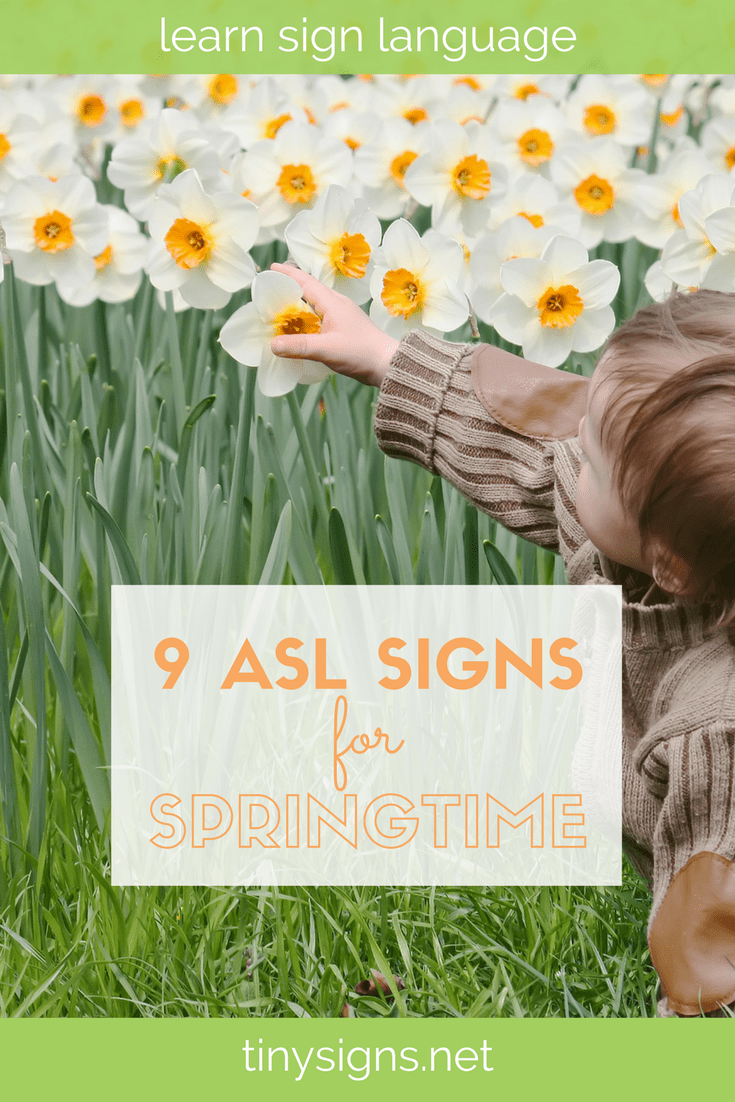 Think Spring! Learn 9 ASL signs with a Spring theme in this free video, as well as a list of fun Spring activities & books for babies, toddlers & preschoolers. Download a free printable of the signs as well!